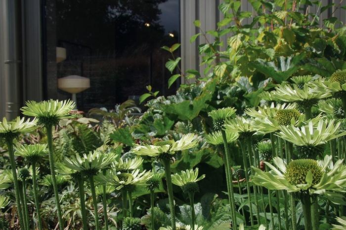 Jardin acidulé